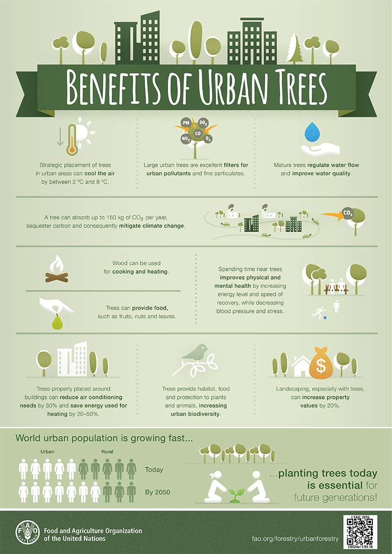 World Forum on urban forests - foreste urbane - FAO-Infographic-UrbanTrees