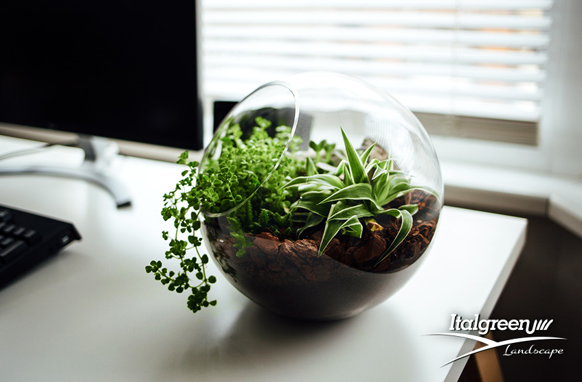 giardino-indoor-terrario