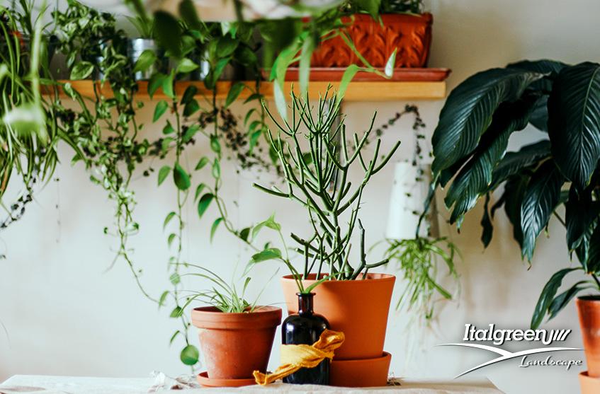 giardino-indoor-verde-interno