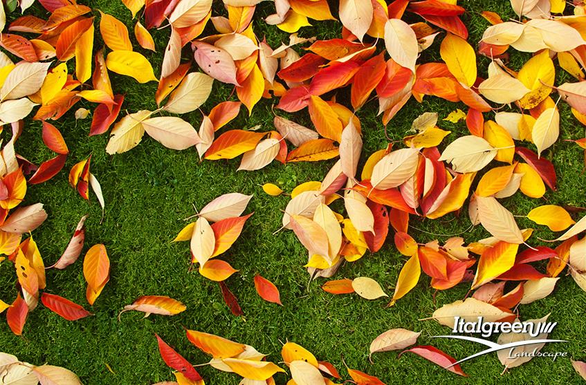 giardino sempre in ordine dalle foglie
