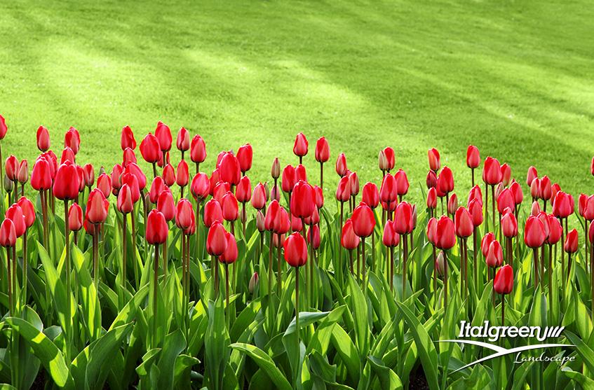 abbellire il giardino aiuole fiorite