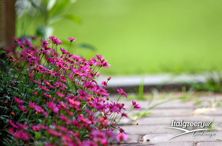 Giardino commestibile fiori Italgreen Landscape