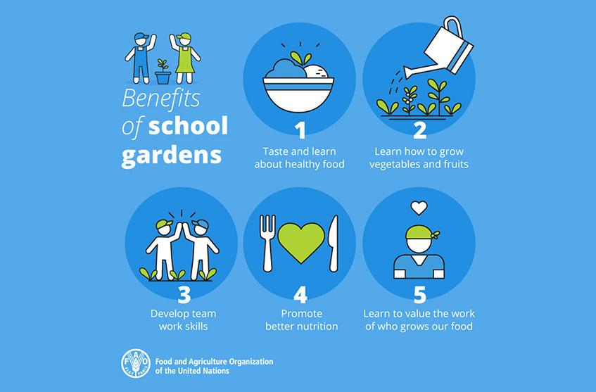 I 5 benefici degli orti a scuola FAO
