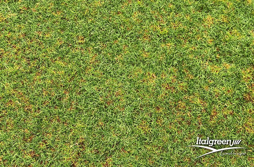 Come eliminare definitivamente il feltro del prato e l'erba secca