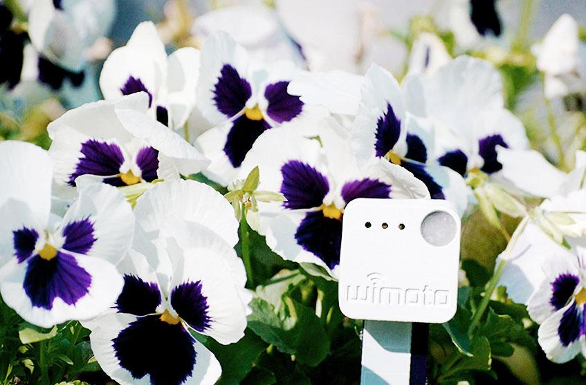 accessori tecnologici per il giardino wimoto grow