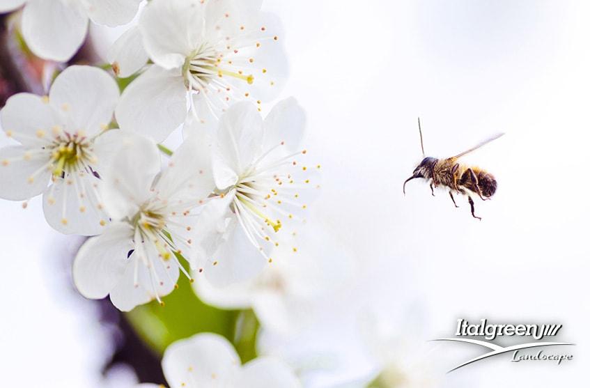 attirare gli insetti utili per il giardino api bombi