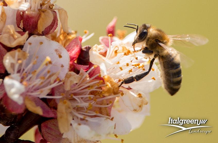 attirare gli insetti utili per il giardino api e bombi