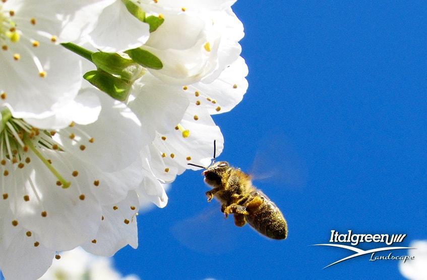 attirare gli insetti utili per il giardino api