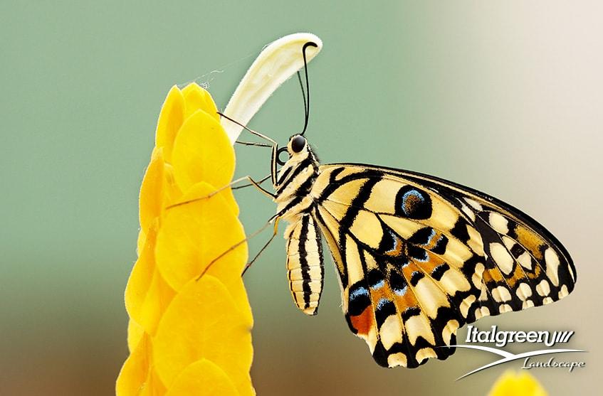 attirare gli insetti utili per il giardino
