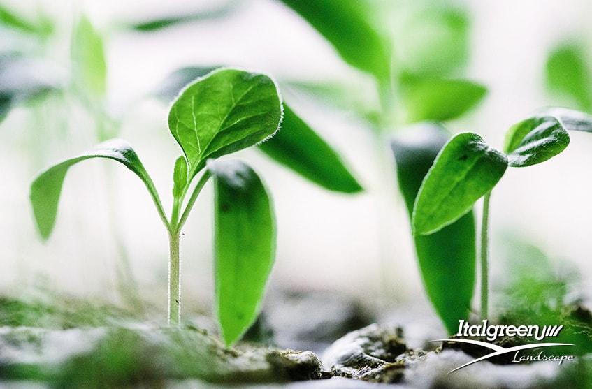 attirare gli insetti utili per il giardino verde