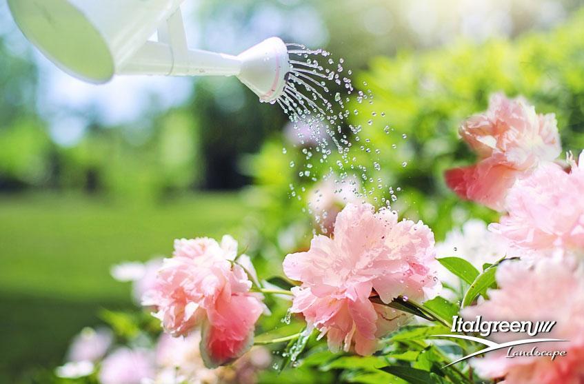 Luglio in giardino i lavori da fare irrigare