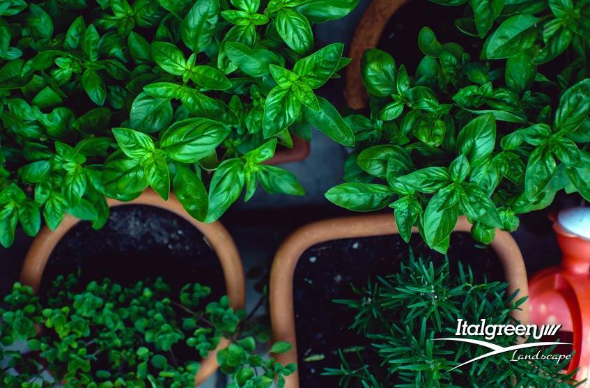 Lavori in giardino ad agosto vasi