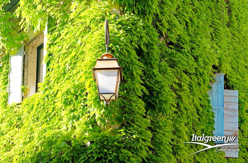 Piante tappezzanti Italgreen Landscape