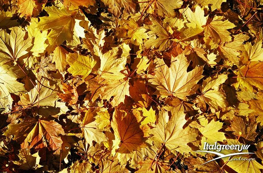 Colori di tendenza giardino autunno 2019-Italgreen Landscape