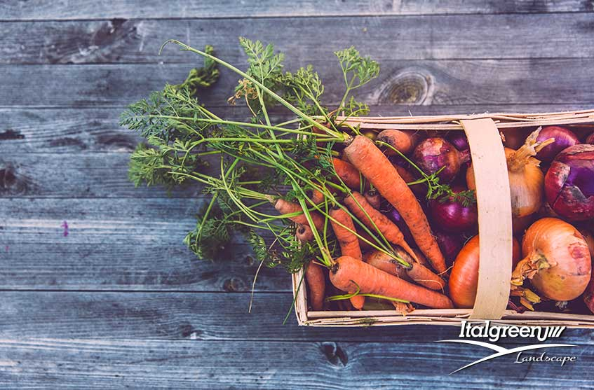 lavori in giardino novembre carote