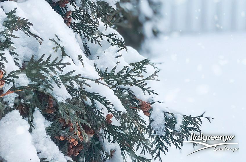giardino in inverno come proteggerlo