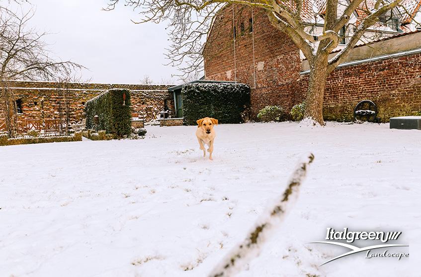 giardino in inverno e la neve