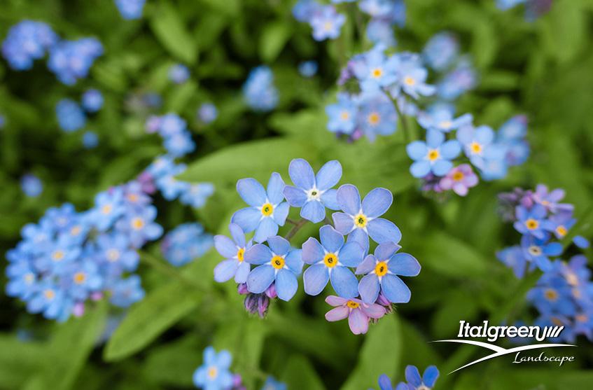 Primavera in giardino fiori Italgreen Landscape