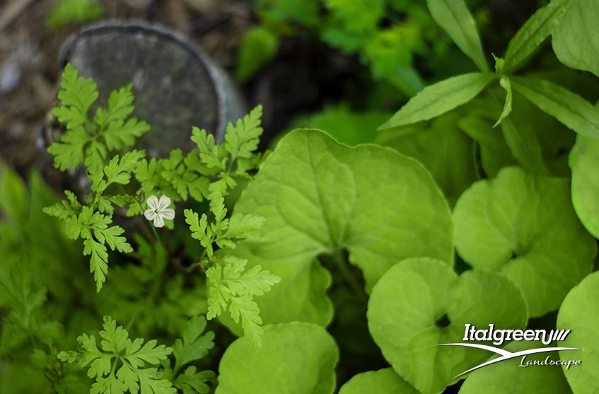 Quali lavori fare ad aprile in giardino Italgreen Landscape piantine