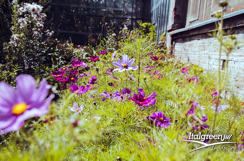 Piante da fiore primaverili Italgreen Landscape