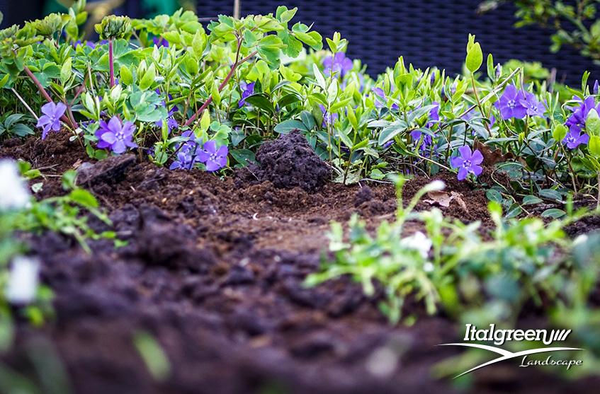 Piante da fiore primaverili colorate Italgreen Landscape