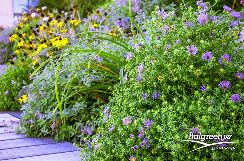 Piante da fiore primaverili per colorare il giardino