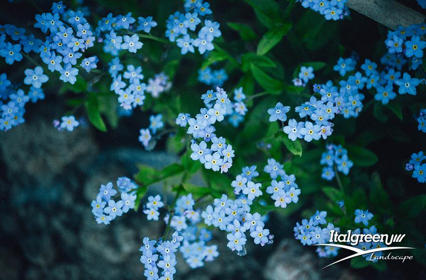 fiori blu per un giardino di tendenza Itagreen Landscape 2