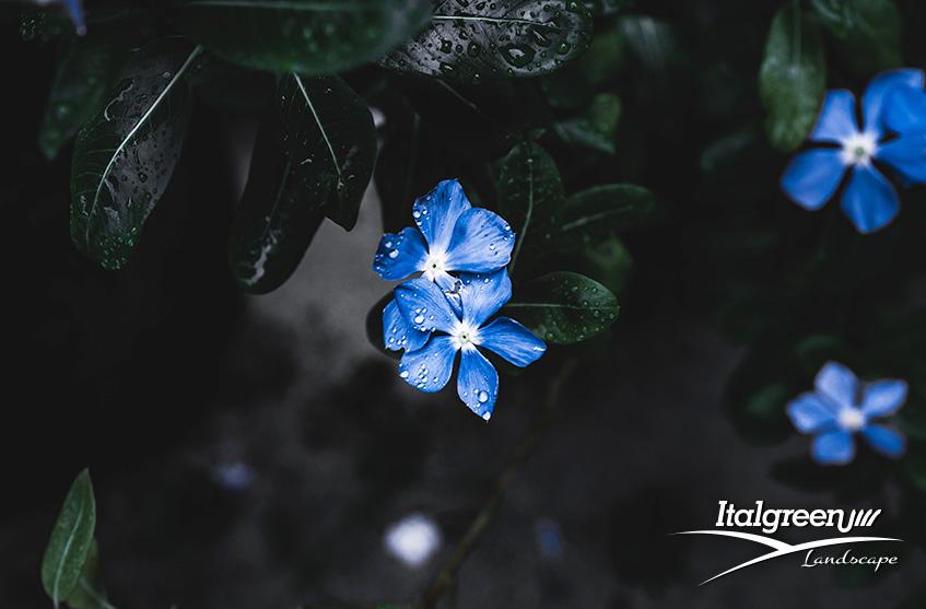 iori blu per un giardino di tendenza Itagreen Landscape copertina
