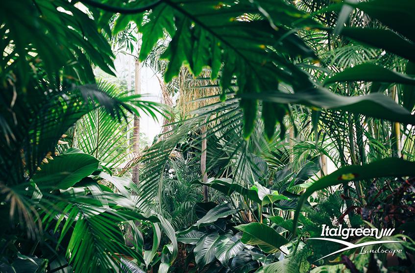 arbusti di piccole dimensioni giardino
