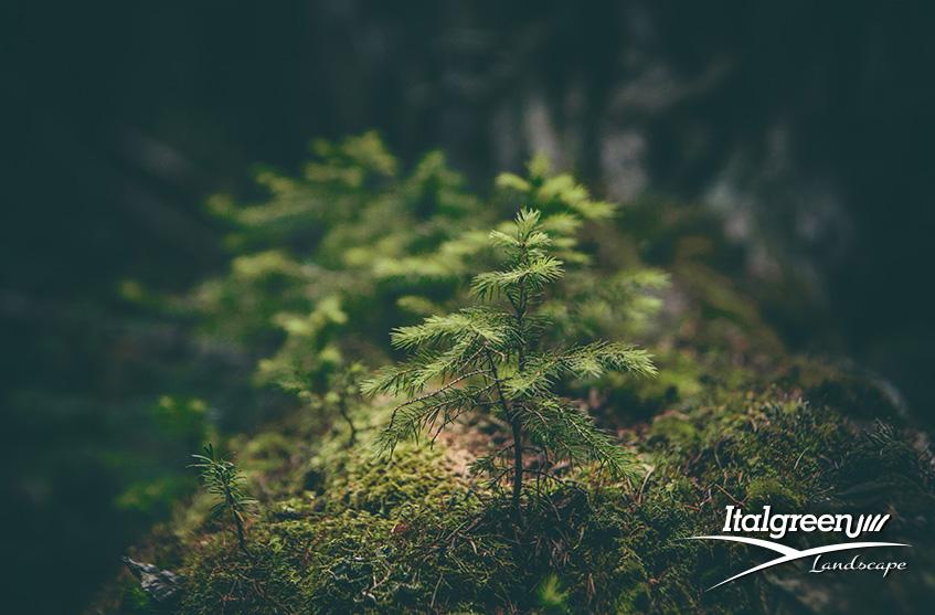 arbusti di piccole dimensioni per il giardino Italgreen Landscape