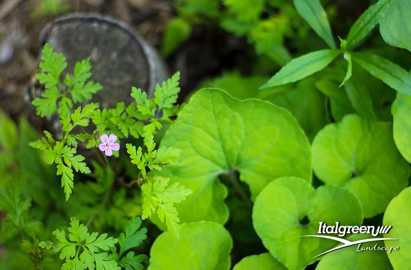 5 regole per progettare un giardino organico Italgreen Landscape
