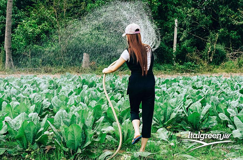 irrigare il prato in estate Italgreen Landscape